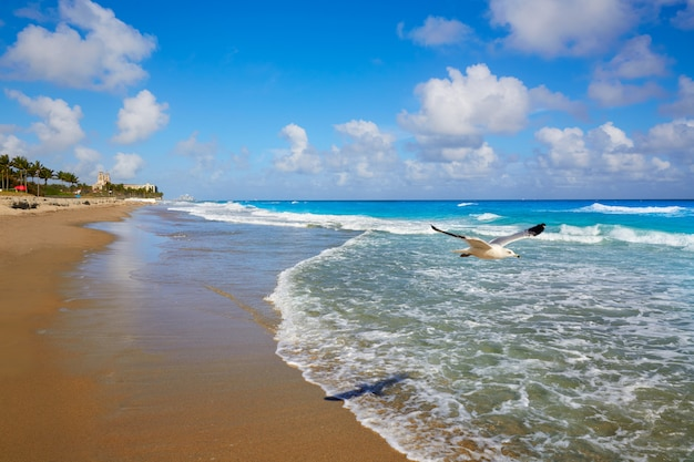 フロリダ州パームビーチビーチの海岸線