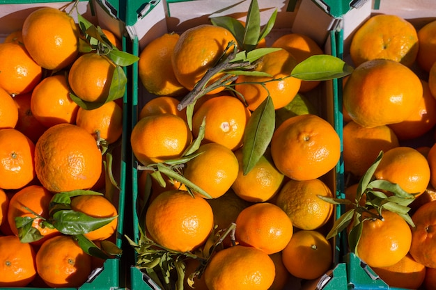 Оранжевые плоды мандарина в корзине урожая в ряд
