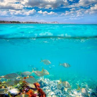 デニアアリカンテマリネタカシアーナビーチは水中の魚