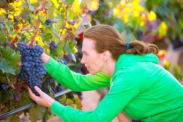 Фермер женщина в винограднике урожай осенью в средиземноморье