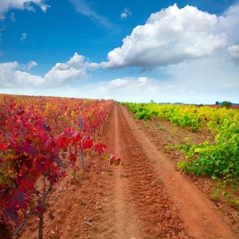 秋の赤いサラゴサスペインのカリニェナとパニザのブドウ畑