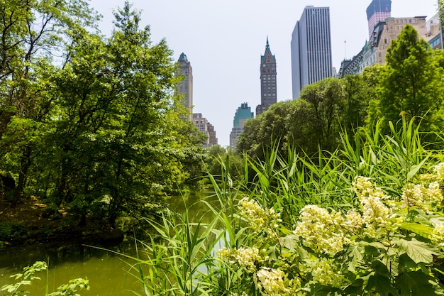 セントラルパークの花マンハッタンニューヨーク