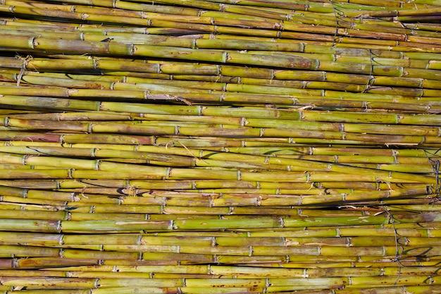 川緑の杖収穫テクスチャパターン背景