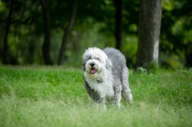 Дон бегает в парке