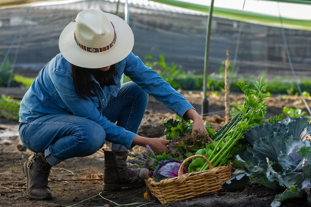 野菜を集める女性