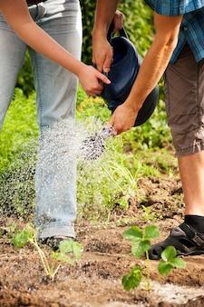ガーデニング、植物に水をまく