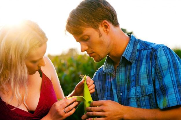 トウモロコシの収穫をチェックする農家