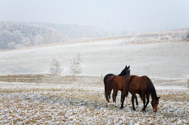 Лошади в зимнем пейзаже