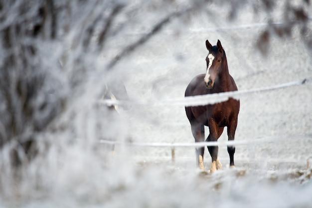 冬の風景の中の馬