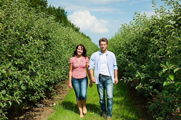 果樹園で歩くカップル