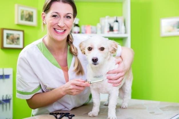 女性はペットトリマーでノミの犬を調べています