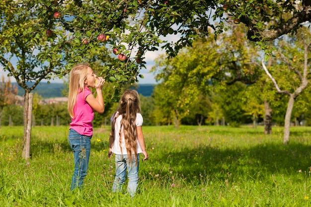 りんごを食べる子どもたち