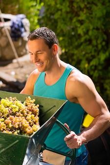 ブドウ収穫機で作業する人
