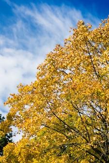 秋または秋の木