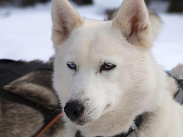 雪に覆われたフィールドに座っている犬のクローズアップ