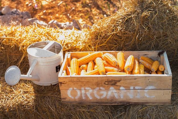 有機農場で乾燥わらとじょうろのトウモロコシ箱
