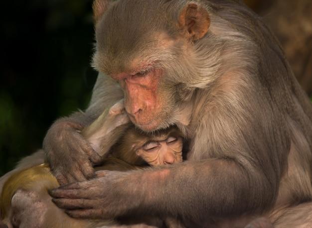 Мать обезьяна обнимает своего ребенка