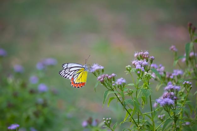 花植物の蝶