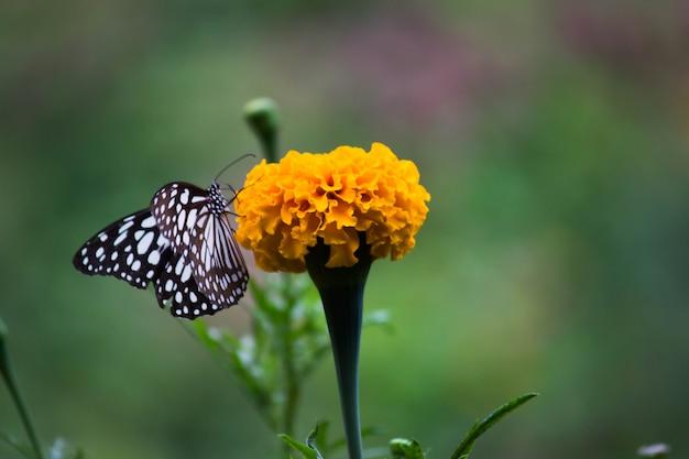 Бабочка на цветочном растении