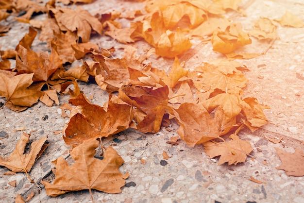 Опавшие осенние листья на серой дороге
