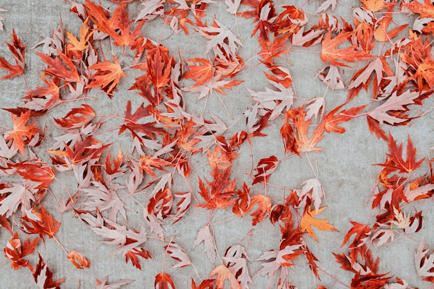 灰色のコンクリートのオレンジ色の紅葉とテーブル