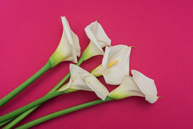 マルサラの壁に白いカラリリーの花