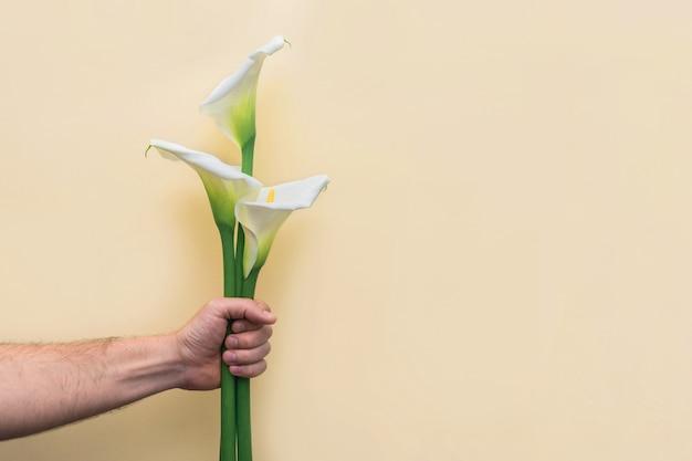 黄色の壁に人間の手で白いカラリリー花ブーケ。