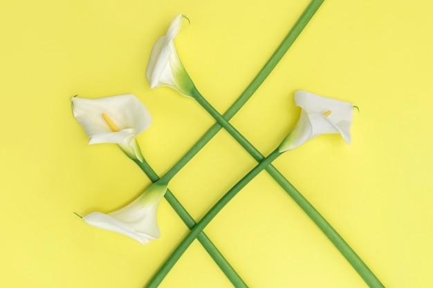 黄色の壁に白いカラーリリー花のグループ。