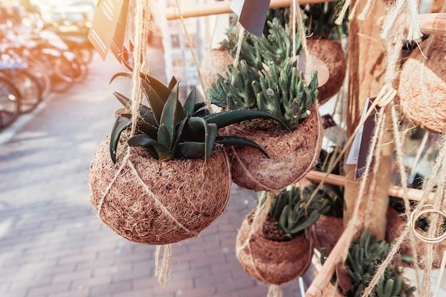 多肉植物、通りの壁の鍋のサボテンのグループ。