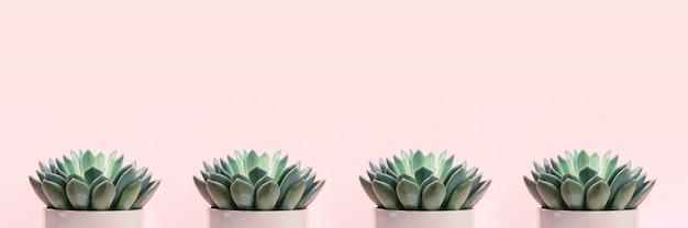 淡いピンクの背景に多肉植物。