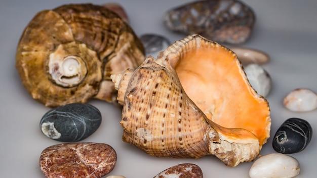 海の貝、海の贈り物