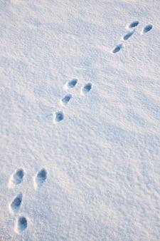 ウサギの痕跡