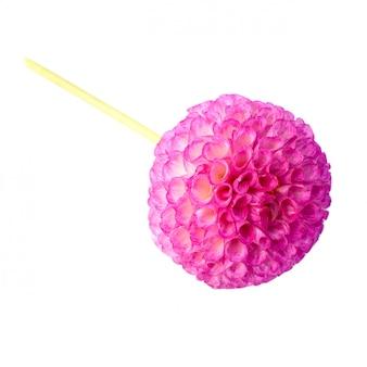 ジョージア花