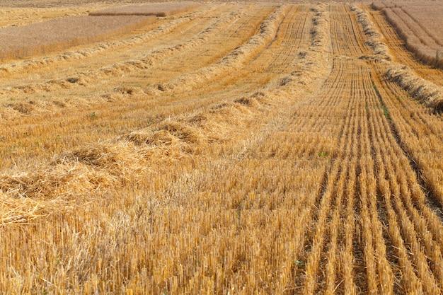 収穫されたフィールド