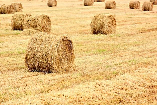 収穫された畑