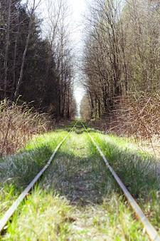 森の狭いゲージ