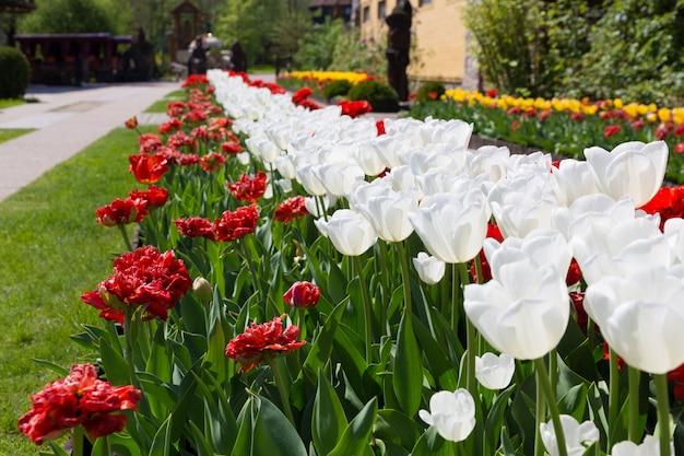 美しい花の路地