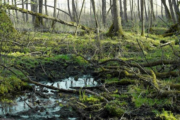 水浸しの通行不可能な地形