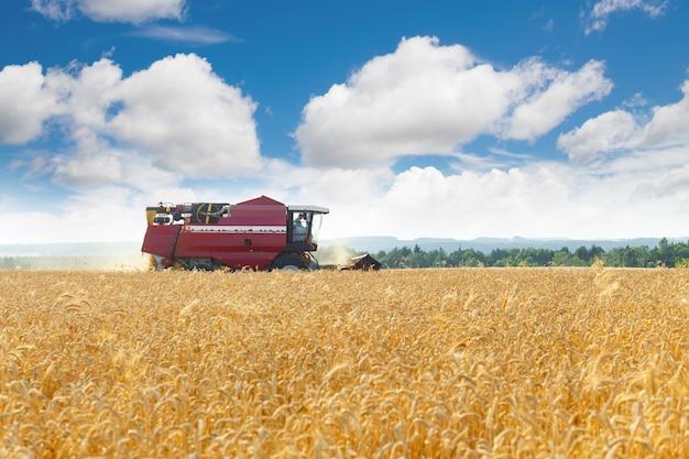 収穫機はバルク収穫穀物です。