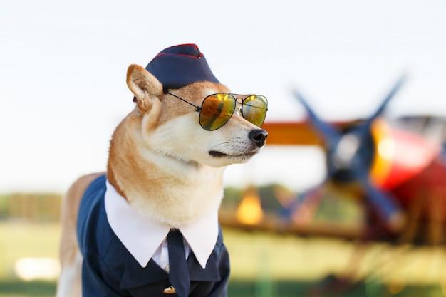 Смешное фото собаки шиба ину