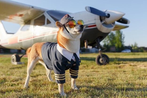 柴犬の面白い写真