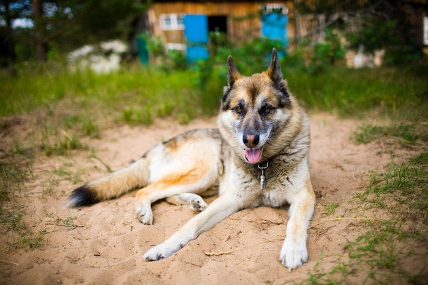 Портрет взрослой собаки на природе.