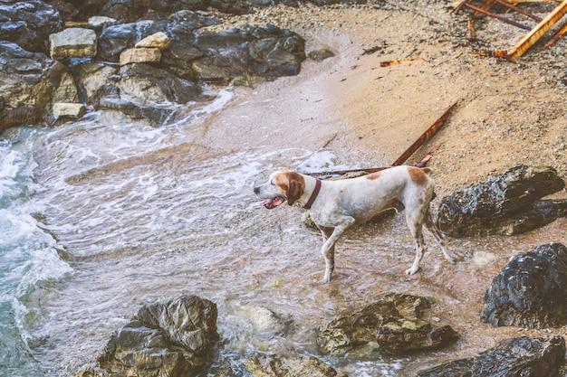 海の横にある浜辺の犬