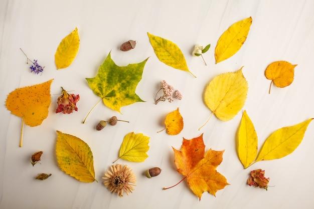 平らな秋の葉、ドライフラワー、白い背景の上のドングリを置きます。