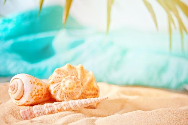ヤシの葉の白い砂の上の貝殻。
