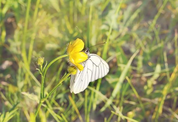 Бабочка на траве поля с теплым светом