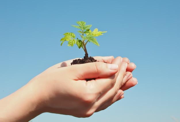 もやしを持っている女性の手。地球の日は環境の概念を保存します。成長している苗林の植栽