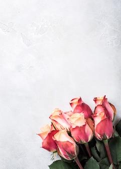 美しいピンクのバラ