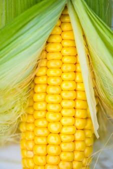 白い背景、上面図、マクロの黄色いトウモロコシの穂軸のクローズアップ