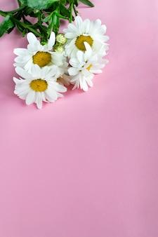 ピンクの背景の緑の葉と新鮮なカモミール